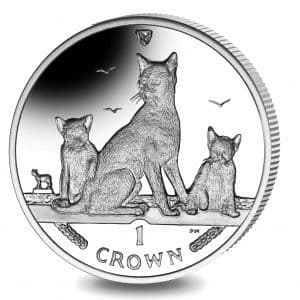 2016 Havana Brown Cat Crown I.O.M