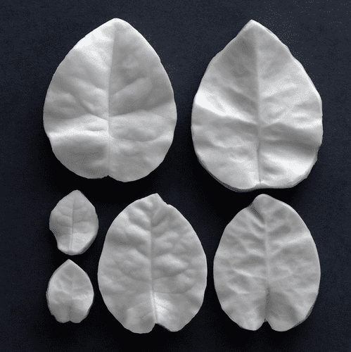 Bougainvillea Bracts Veiner Set Of 3 Botanically Correct Products By Robert Haynes