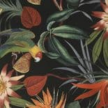 Paradise Parrot Black Wallpaper 108602 By Superfresco Easy Graham & Brown