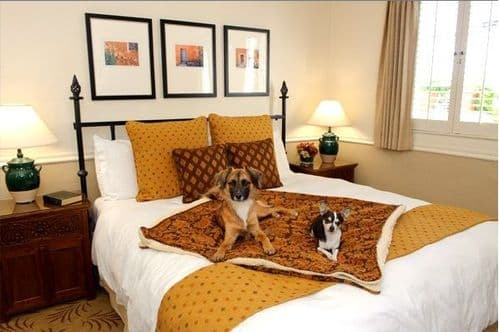 B and B, Guest House, Inns