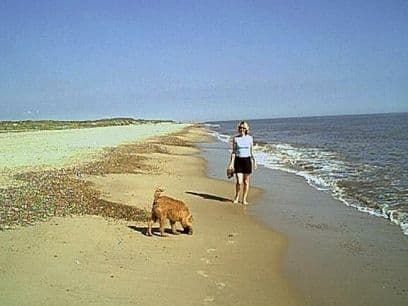 Dog Friendly Holidays Great Yarmouth