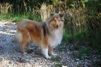 Hillside Dog Friendly CampSite Wimborne Dorset