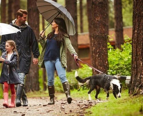 Holidays in the Forest with dogs - Lodges and cabins pets allowed