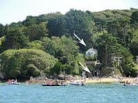 Kingsgrove pets-welcome cottage Salcombe South Devon